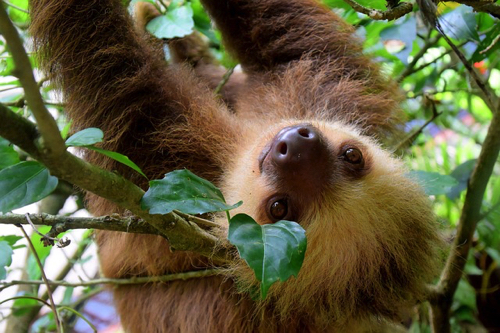 sloth-1879999_640.jpg